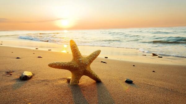 seastar_on_the_beach_hd